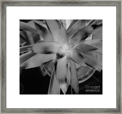 Negative Bromeliad Framed Print by Emily Kelley