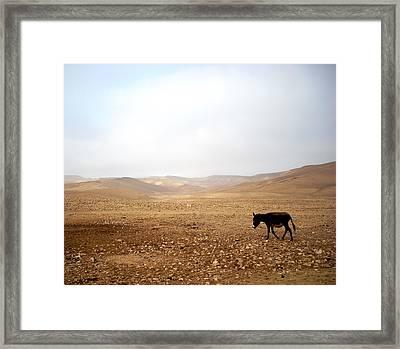 Negev Donkey Framed Print by Rachel Figueroa