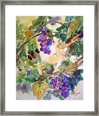 Neighborhood Grapevine Framed Print by Kathy Braud