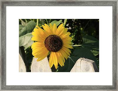 Neighborly Advance Framed Print by Alan Rutherford