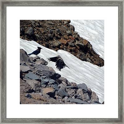 Neighbors At Crater Lake Framed Print