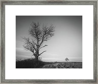 Neighbours Framed Print by Davorin Mance
