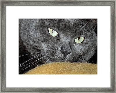 My Nellie-belle's Catitude Framed Print