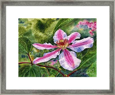 Nelly Moser Clematis Framed Print