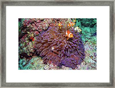 Nemo's Home Framed Print