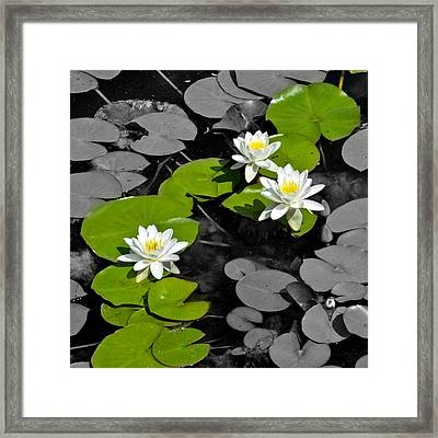 Framed Print featuring the photograph Nenuphar by Gina Dsgn