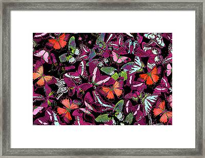 Neon Butterflies Framed Print by JQ Licensing