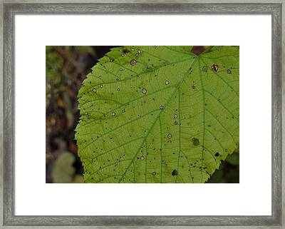 Neon Greens Framed Print by JAMART Photography