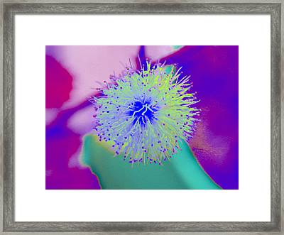 Neon Green Puff Explosion Framed Print