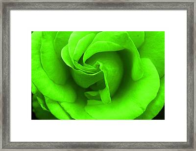 Neon Green Rose Framed Print by Robyn Stacey