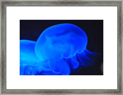 Neon Jelly Blue II Framed Print