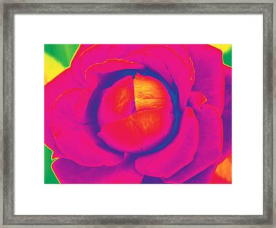 Neon Lettuce Rose Framed Print by Samantha Thome