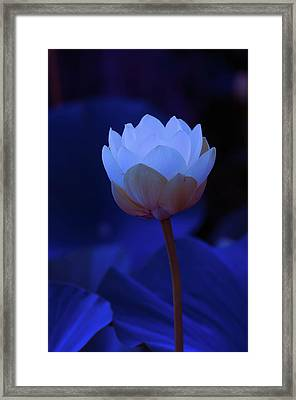 Framed Print featuring the photograph Neon Lotus by Carolyn Dalessandro
