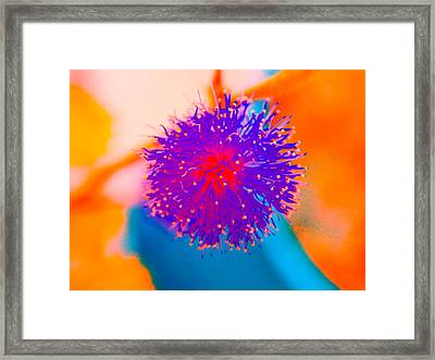 Neon Pink Puff Explosion Framed Print