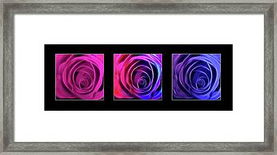 Neon Roses Triptych On Black Framed Print