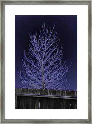 Neon Tree Framed Print