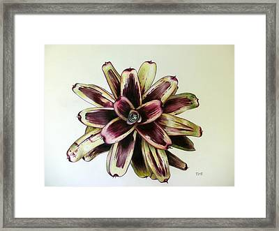 Neoregelia Painted Delight Framed Print by Penrith Goff