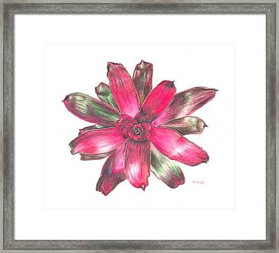 Neoregelia Puppy Love Framed Print by Penrith Goff