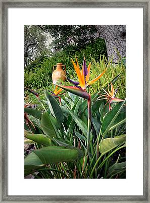 Nepenthe Bird Of Paradise Framed Print by Joyce Dickens
