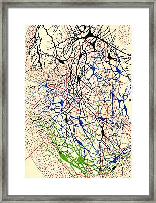 Nerve Cells Santiago Ramon Y Cajal Framed Print by Science Source