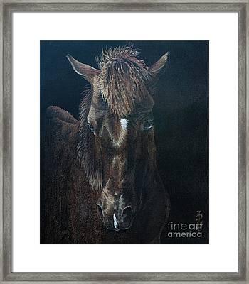 Nervous Colt  Milltown Fair Framed Print by Pauline Sharp