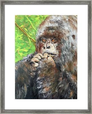 Nervous Mama Gorilla Framed Print