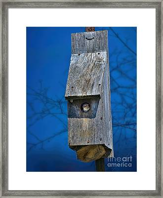 Nest Box In The Spring Framed Print by Henry Kowalski
