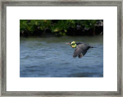 Nest Building Framed Print by Joseph G Holland