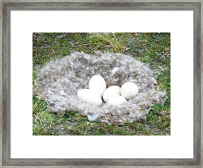 Nest Eggs Framed Print