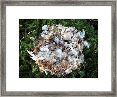 Nest In Moss Framed Print by Heather S Huston