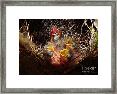Nest With Brood Parasite Framed Print