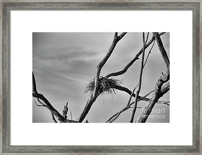 Framed Print featuring the photograph Nested by Douglas Barnard