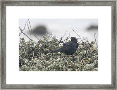 Nesting Framed Print by Amy Holmes