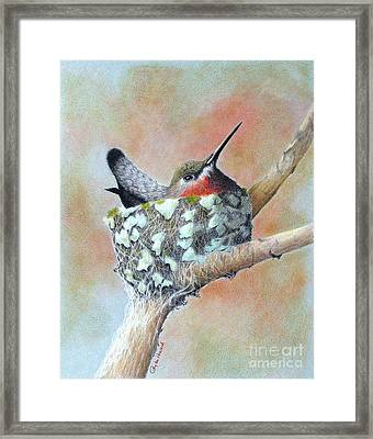 Framed Print featuring the drawing Nesting Anna by Phyllis Howard