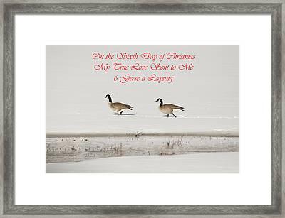 Nesting Canada Geese Framed Print by Daniel Hebard