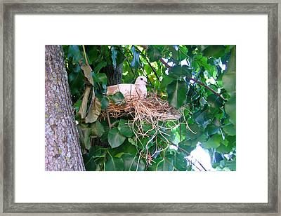 Nesting Dove 1 Framed Print
