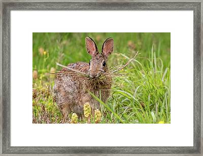 Nesting Rabbit Framed Print by Terry DeLuco