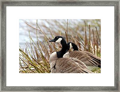 Nesting Time Framed Print by Sharon Talson