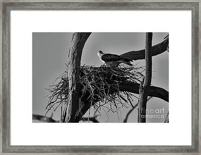 Framed Print featuring the photograph Nesting V2 by Douglas Barnard