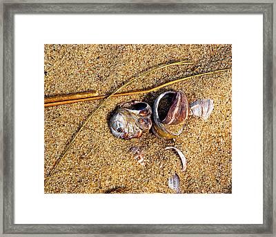 Nestled In The Sand Framed Print by Lynda Lehmann