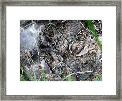 Nestled In Their Den Framed Print