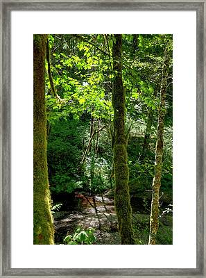 Nestucca River 3039 12x18 Framed Print