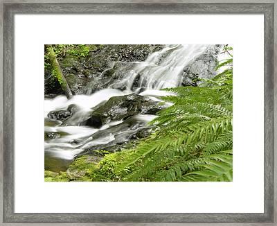 Nestucca River Detail Framed Print by Jean Noren
