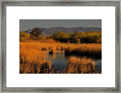 Nevada Marshlands At Sunset Framed Print