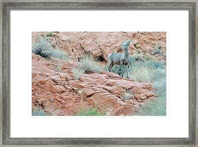 Nevada Rocks 31c Framed Print