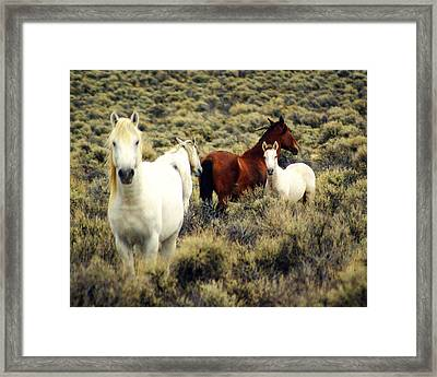 Nevada Wild Horses Framed Print by Marty Koch