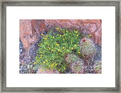 Framed Print featuring the photograph Nevada Yellow Wildflower by Linda Phelps