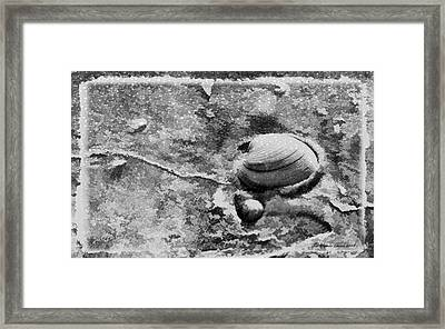 Never Clam Up Bw Framed Print