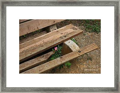 Never Fading Nature Framed Print