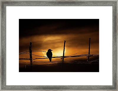 Never More Quoth The Raven Framed Print by Randall Nyhof